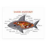 Anatomía del tiburón tarjetas postales