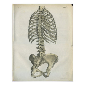 Anatomía del vintage de la espina dorsal posterior