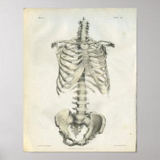Anatomía del vintage del esqueleto axial poster