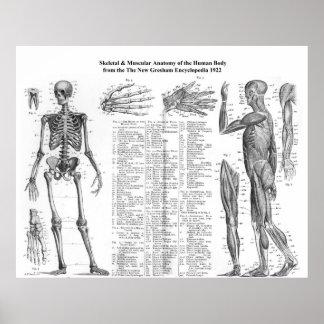 Anatomía esquelética y muscular humana a partir de impresiones