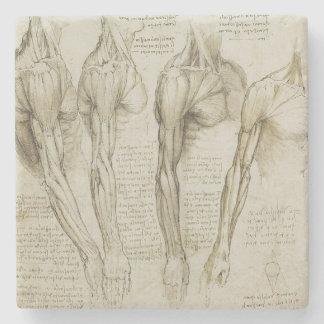 Anatomía humana del brazo de da Vinci Posavasos De Piedra