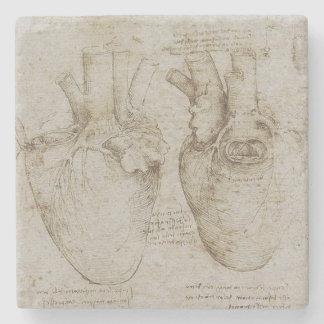 Anatomía humana del corazón de da Vinci Posavasos De Piedra