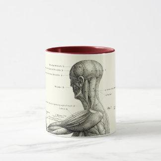Anatomía humana, músculos del cuerpo humano taza