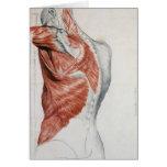 Anatomía humana; Músculos del torso y del hombro Tarjetón
