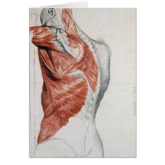 Anatomía humana Músculos del torso y del hombro Tarjetón