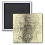 Anatomía humana, torso femenino de Leonardo da Imán Cuadrado