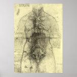 Anatomía humana, torso femenino de Leonardo da Póster