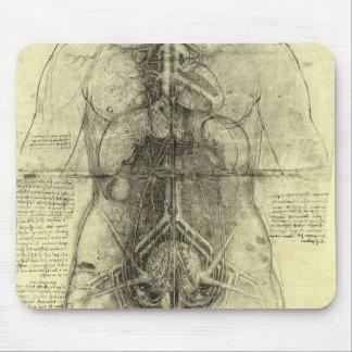 Anatomía humana, torso femenino de Leonardo da Tapete De Raton