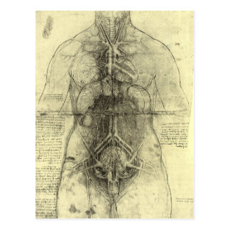 Anatomía humana, torso femenino de Leonardo da Postal