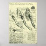 Anatomía Leonardo da Vinci de los músculos del bra Posters