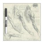 Anatomía Leonardo da Vinci de los músculos del bra Pizarras Blancas