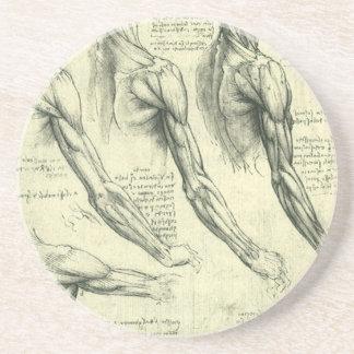 Anatomía Leonardo da Vinci de los músculos del bra Posavasos Diseño