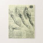 Anatomía Leonardo da Vinci de los músculos del bra Puzzles