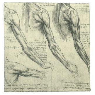 Anatomía Leonardo da Vinci de los músculos del bra Servilletas De Papel