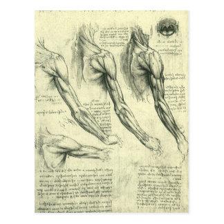 Anatomía Leonardo da Vinci de los músculos del bra Tarjeta Postal