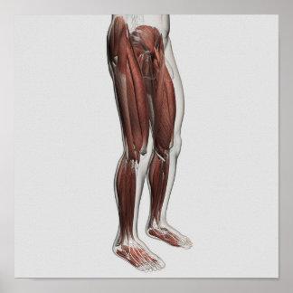 Anatomía masculina de las piernas humanas, 1 impresiones