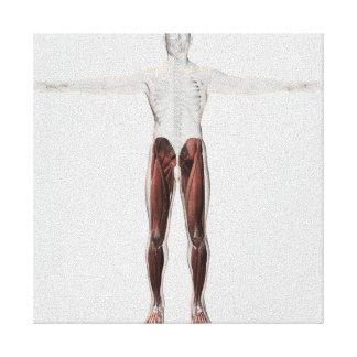 Anatomía masculina del músculo de las piernas impresión en lona