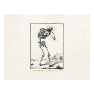Anatomía médica esquelética humana antigua del tarjeta postal