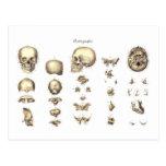 Anatomía metódica del cráneo tarjetas postales