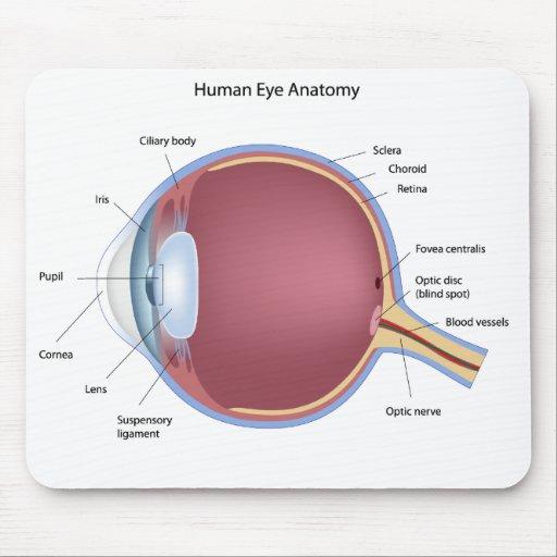 Anatomía Mousepad del ojo humano Tapetes De Raton