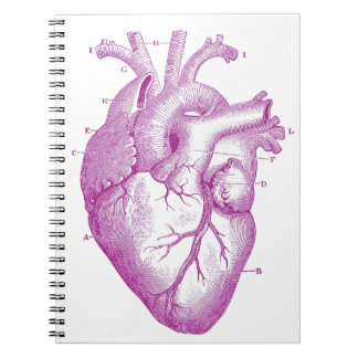 Anatomía púrpura del corazón del vintage libreta espiral