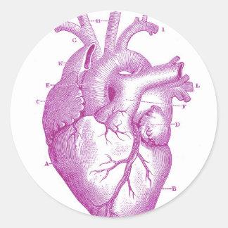 Anatomía púrpura del corazón del vintage pegatina redonda