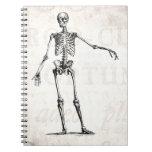 Anatomía retra esquelética de los esqueletos de lo libreta espiral