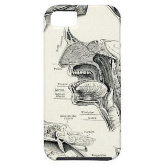 Anatomía - sentidos del ser humano iPhone 5 cárcasas