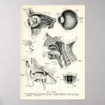 Anatomía - sentidos del ser humano impresiones