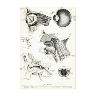 Anatomía - sentidos del ser humano impresión de lienzo