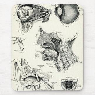Anatomía - sentidos del ser humano alfombrillas de ratón