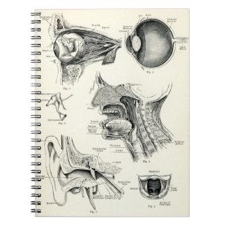 Anatomía - sentidos del ser humano libro de apuntes