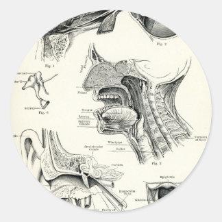 Anatomía - sentidos del ser humano etiquetas redondas