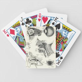 Anatomía - sentidos del ser humano baraja cartas de poker