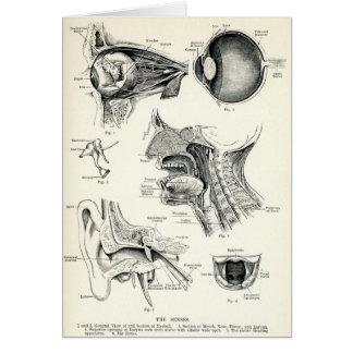 Anatomía - sentidos del ser humano tarjeta