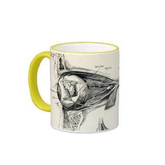 Anatomía - sentidos del ser humano tazas de café