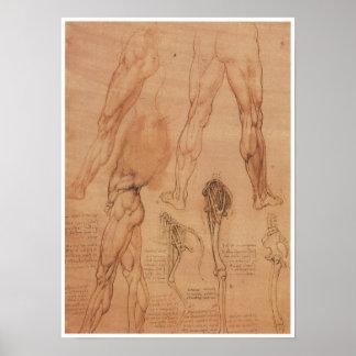Anatomía superficial de la extremidad más baja, da póster