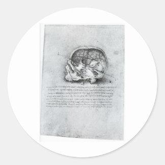 Anatomic Painting Of Skull Classic Round Sticker