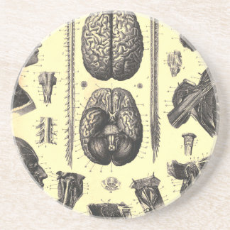 Anatomical Brain and More Beverage Coaster
