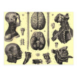 Anatomical Brain and More Post Card