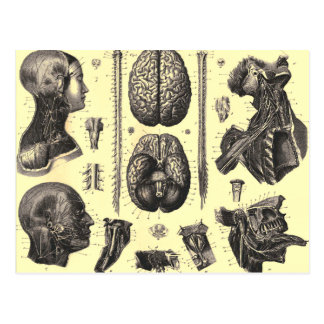 Anatomical Brain and More Postcard