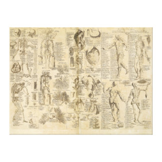 Anatomical Chart from Cyclopaedia 1728 Canvas Print