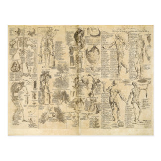 Anatomical Chart from Cyclopaedia 1728 Postcard