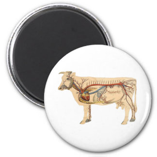 Anatomical Cute Cow Magnet