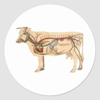 Anatomical Cute Cow Round Stickers
