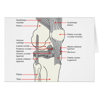 Anatomical Diagram of a Human Right Knee Joint Card