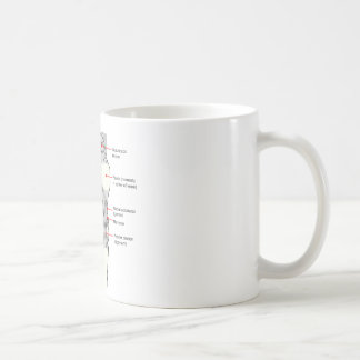 Anatomical Diagram of a Human Right Knee Joint Coffee Mug
