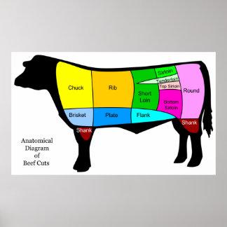 Anatomical Diagram of American Primal Beef Cuts Poster