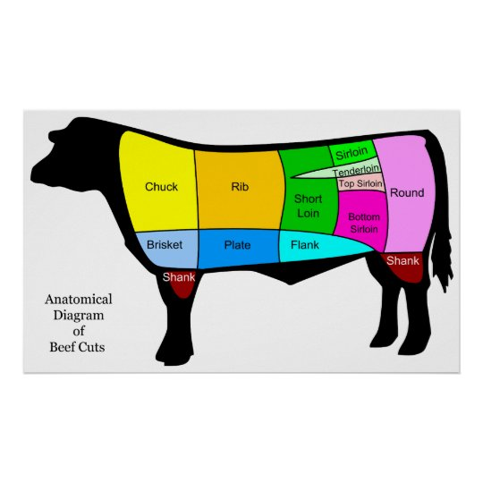 Anatomical Diagram Of American Primal Beef Cuts Poster Zazzle