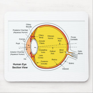 Anatomical Diagram of the Human Eye Ball Mouse Pad